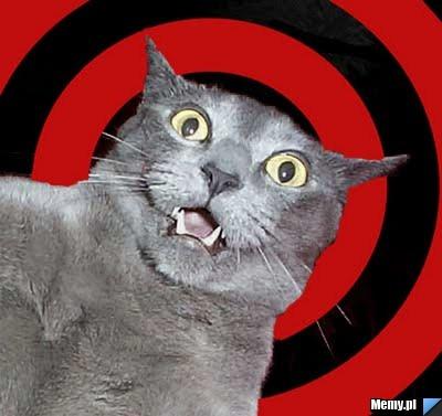 zdziwiony_kot.jpg