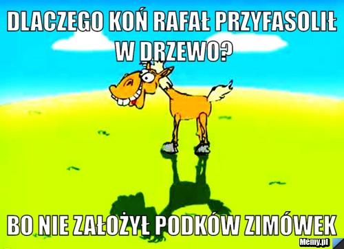 Dlaczego koń Rafał przyfasolił w drzewo? bo nie założył podków zimówek