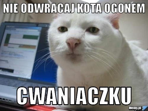 https://i1.memy.pl/obrazki/7374225150_nie_odwracaj_kota_ogonem.jpg