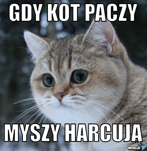 Gdy Kot Paczy Myszy Harcują Memypl