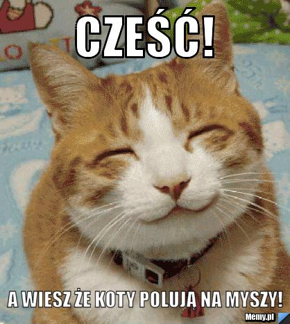 Cześć A Wiesz że Koty Polują Na Myszy Memypl