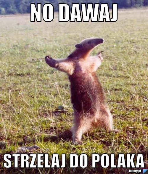 http://i1.memy.pl/obrazki/d38a139476_no_dawaj.jpg