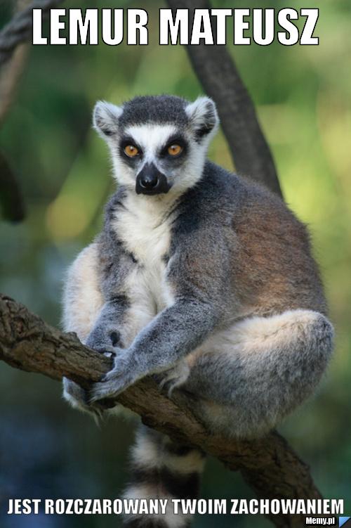Lemur mateusz jest rozczarowany twoim zachowaniem